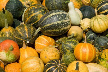 Pumpkins 版權商用圖片