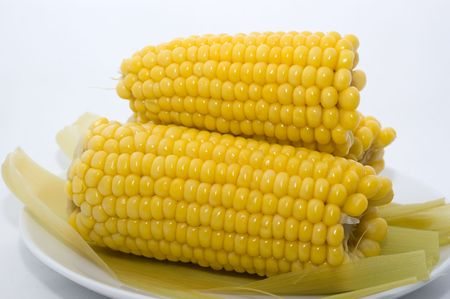 Boiled corn lactic ripeness ona plate on a white background closeup