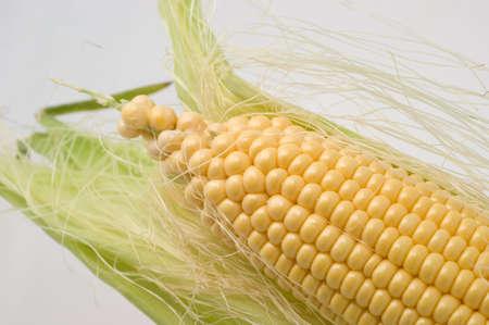 Fresh corn lactic ripeness on a white background closeup