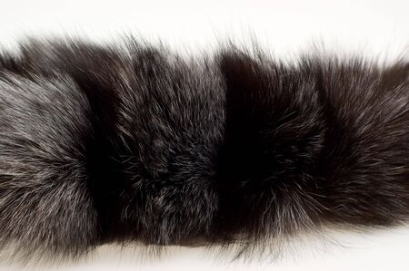 Female fur collar foxes on a white background photo