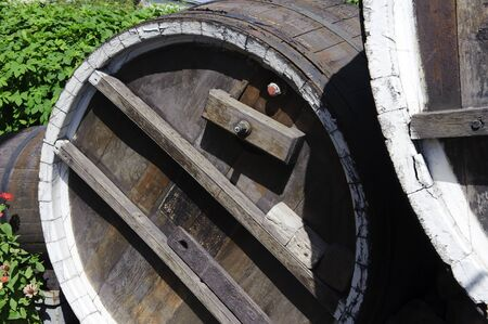 An old wooden barrel twined hops in summer sunny day