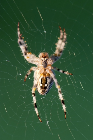A spider on its Web lit by the morning sun