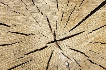 Background of a cut wooden barrel closeup