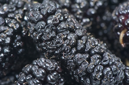 Fruits of black ripe sweet mulberry close up