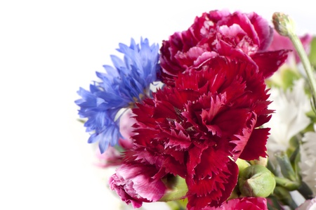 Red carnation blooms close up Stockfoto