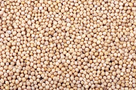 Background of mustard seeds close up Banco de Imagens