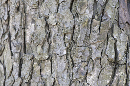 The structural background of light bark closeup