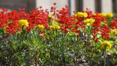 Summer flowers garden on a bright sunny day closeup