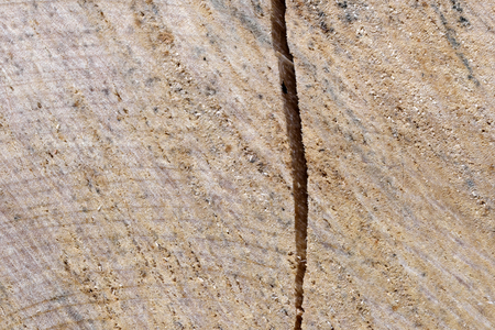 Wooden textural background from birch close-up macro shot Reklamní fotografie