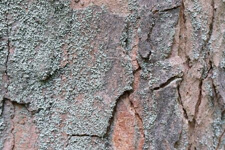 Background from the bark of a living growing old wood texture Imagens