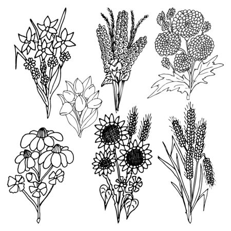 Set of graphic floral vector elements hand-drawn in the style of primitivism Çizim