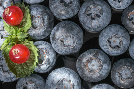 Sweet ripe blueberries close up macro photography Banque d'images