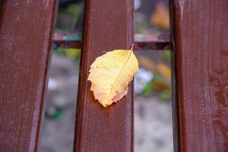 Autumn still life sketch on a painted garden bench lies a fallen yellow leaf close-up