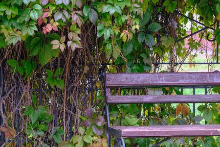 A wooden bench in a park Stok Fotoğraf