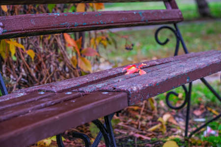 Close-up of wooden bench in the park