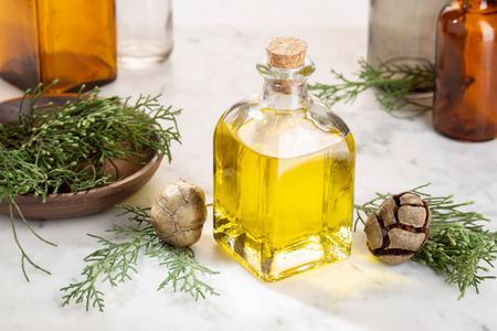 Cypress essential oil. Cypress oil on bottle for beauty, skin care, wellness. Alternative medicine Stok Fotoğraf