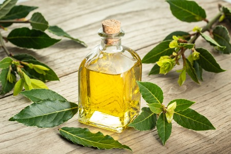 Aceite esencial de laurel de bahía sobre fondo de madera. Aceite de bahía en botella de vidrio. Laurus nobilis Foto de archivo
