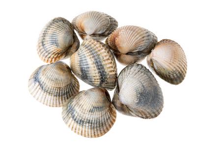Fresh Cockles isolated on white background. Cerastoderma edule. Bivalve mollusk