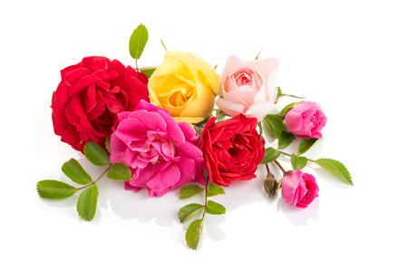 Groep rozen geïsoleerd op een witte achtergrond. Rozensamenstelling voor kaarten, frame, poster, banner Stockfoto