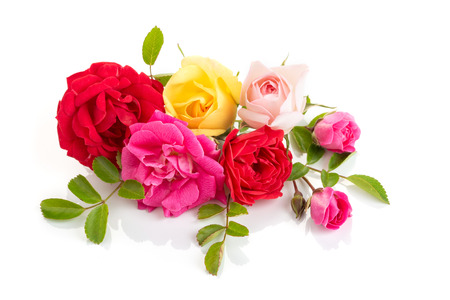 Group of Roses isolated on white background. Roses composition for cards, frame, poster, banner Imagens