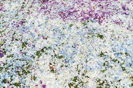 Hydrangea flower petals background. Wedding backdrop Banco de Imagens