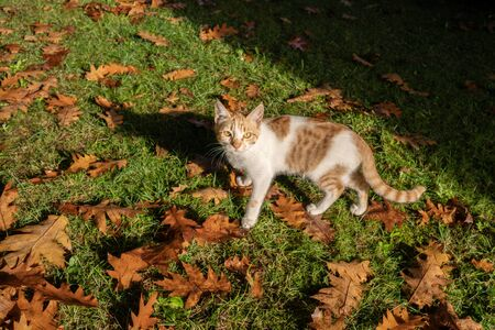 Kitty looking at camera with autumn background on morning. 写真素材