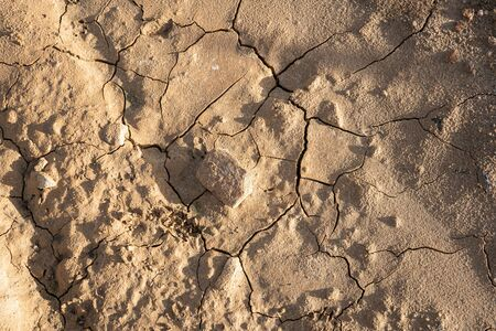 Dry cracked ground background texture. Dried soil