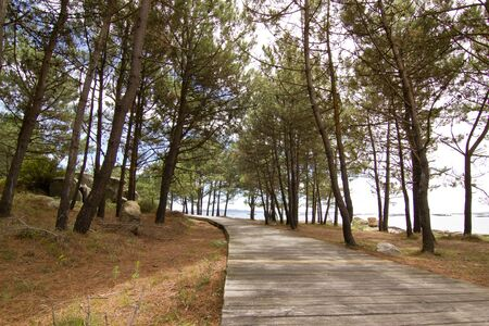 Pine forest, wooden footpath and beach of Galicia, Spain. Concept of ecologically clean tourism and protection of climate in our planet