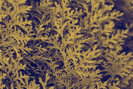 Fir duotone background. Foliage backdrop