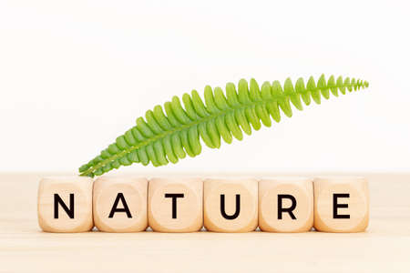 Nature concept. Wooden blocks with text and green leaf on table. Copy space