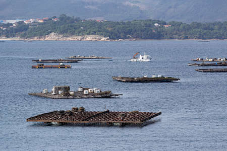 Seascape of a boat sailing between mussel platforms called batea. Marine landscape. Rias Baixas, Galicia, Spain