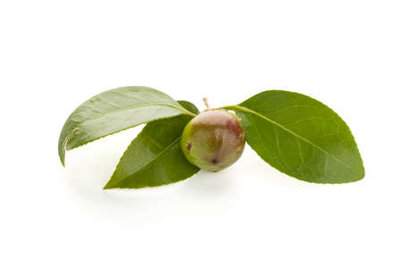 Fresh Camellia seed and leaves isolated on white background
