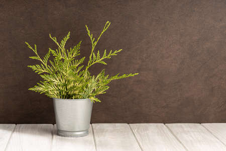 Empty white wooden table with green plant pot and brown textured wall background. Copy space