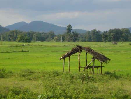 indian village: Indian Village Hut
