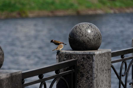 Two sparrows on the handrail of the bridge by the river photo