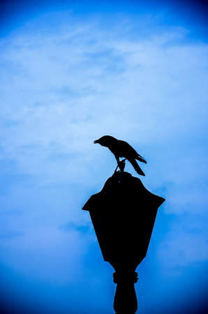 a silhouette bird sitting on lamp with blue sky backgroung