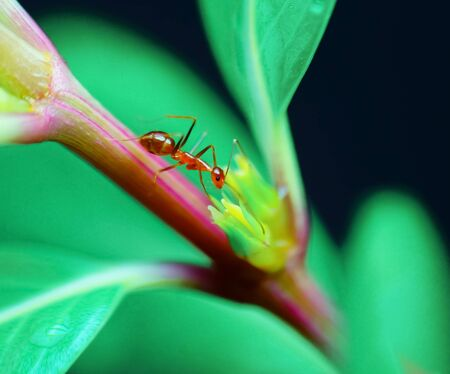 A closeup macro shot of an ant finding food on a rainy day.
