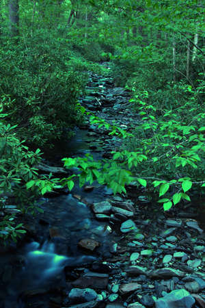 A wild water stream in Smoky Mountains National Park USA photo