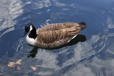 birdwatching: Birdwatching