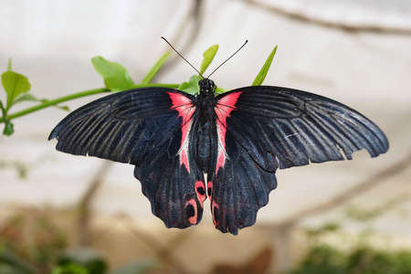 cried: Buterfly