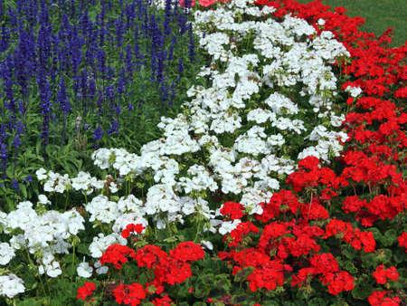 Bloemen in de tuin Stockfoto