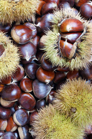 Chestnuts of Sicily