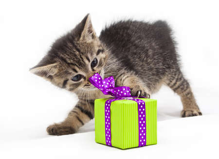 kitten with green present