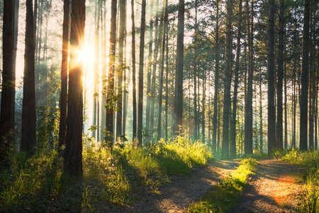 arboles frondosos: atardecer en el bosque