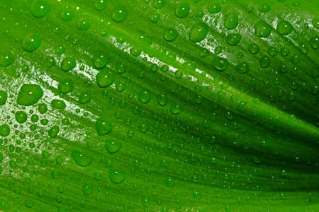 green leaf with drops of water Stock Photo - 11087596