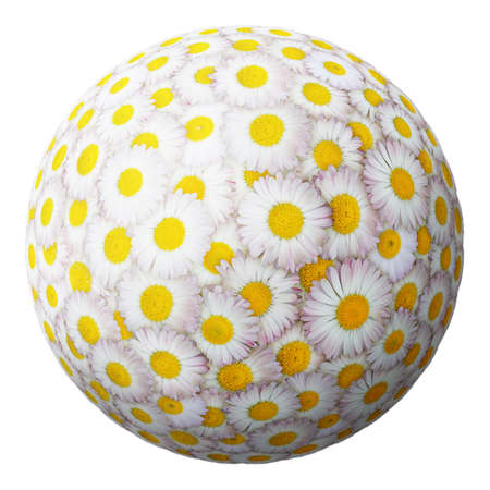 sphere from daisies isolated on a white background photo