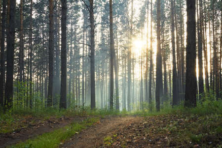 sunset in the misty forest Stock Photo - 11374571