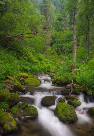 beautiful forest stream Stock Photo - 12082028