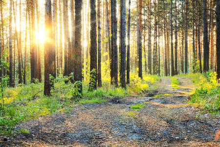 sunset in the woods Stock Photo - 13041495