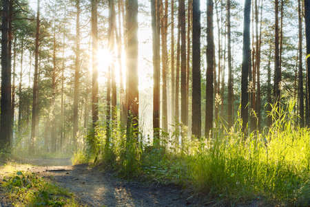 sunset in the foggy woods Stock Photo - 13296453